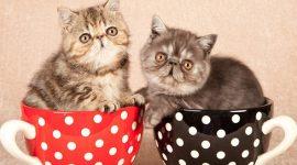 В Лондоне открылось первое кафе с кошками