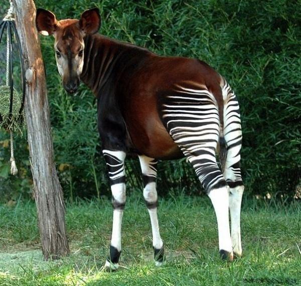 animals18