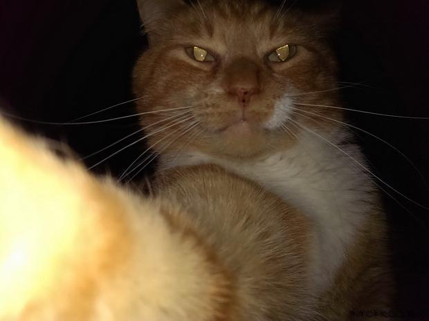 кошка10