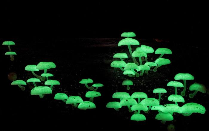 photo-mushrooms2