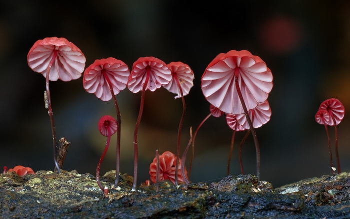 photo-mushrooms5
