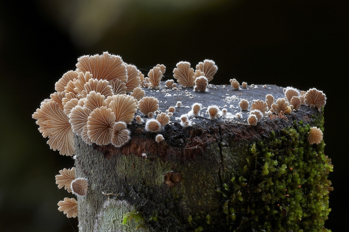 photo-mushrooms6