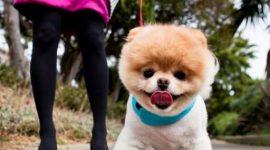 Самая популярная собака Фейсбука