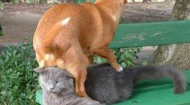 Из жизни кошек и собак