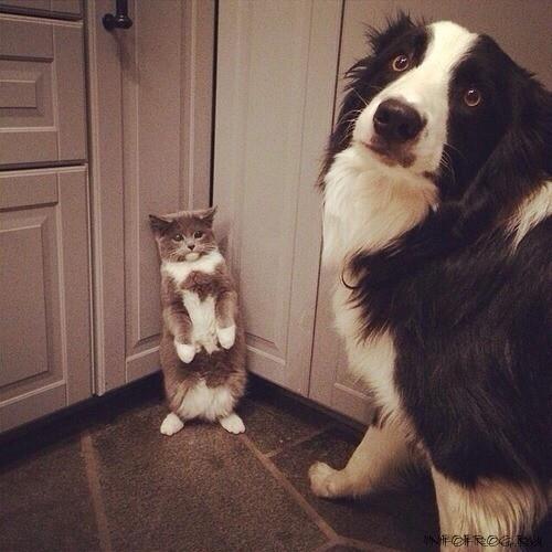 catdog13