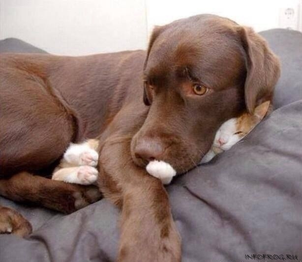 catdog15
