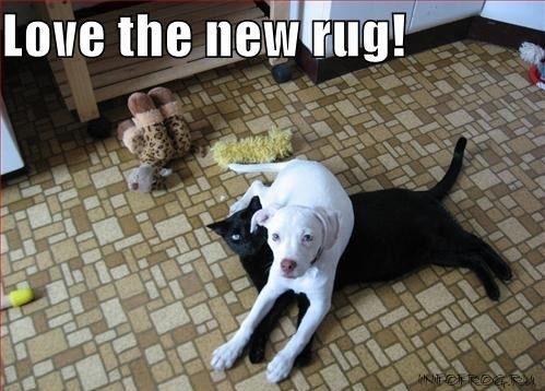 catdog3