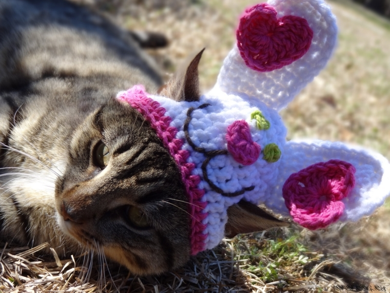 Шапочки для кошек своими руками