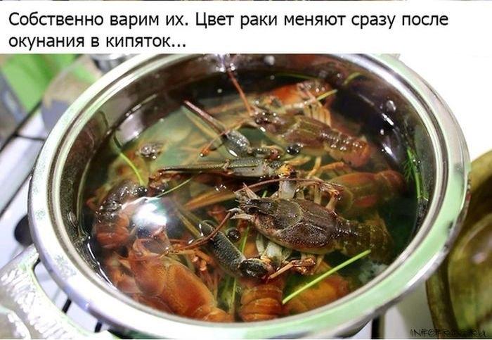 kak_pravilno_varit_rakov6