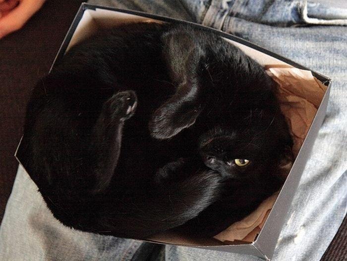 Кот в коробке