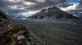 В Новой Зеландии нашли останки «сухопутной летучей мыши».