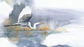 Мои акварельные рисунки птиц