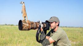 Животные, которые хотят быть фотографами
