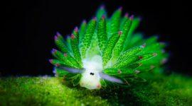 Очередная прелесть из морских глубин!