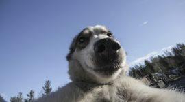 Селфипёс — продолжаем серию «собачкиных» селфи!