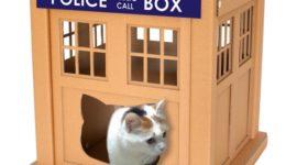 Строим супер дом из коробки для любимой котейки!