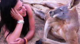 Животные Австралии, которые плевать хотели наваши стереотипы