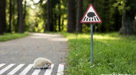 С заботой о животных, для маленьких жителей нашего города.