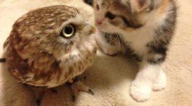 Дружба котенка и совы стала хитом соцсетей »