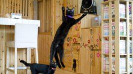 Я посетил единственное в мире кафе «Черный кот»