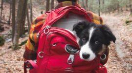 Фотоподборка — Кемпинг с собаками