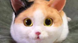 Сумка-кошка — новая мода в Японии