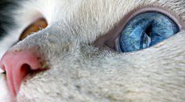 Удивительные кошки — фотоподборка.