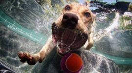 Собаки ныряют — подборка фото от Сета Кастила