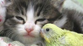 Дружба животных — без преград