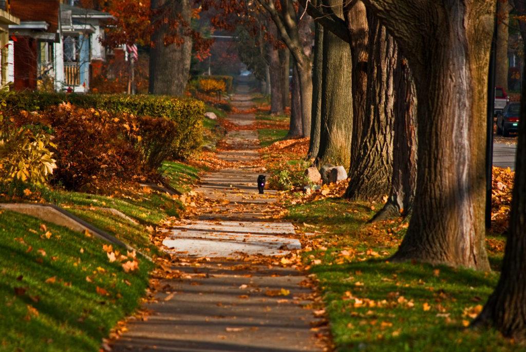 autumn-2