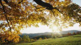 Великолепная осень