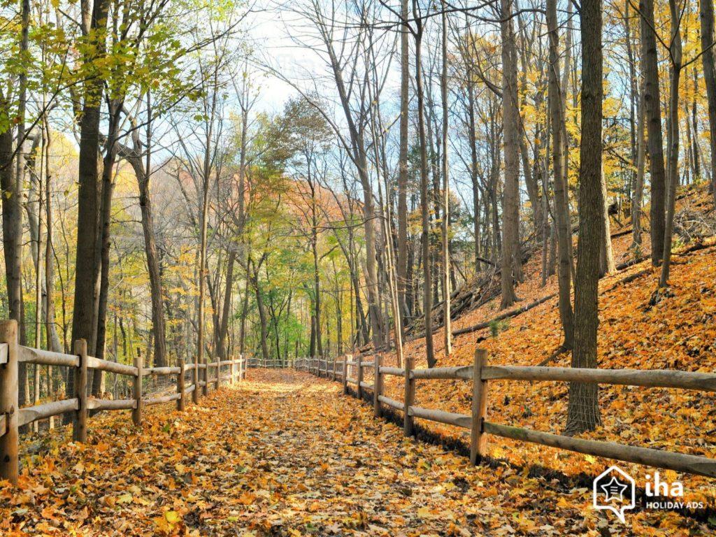 toronto-autumn1