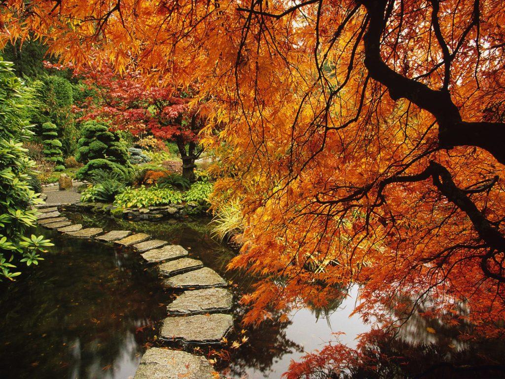 vancouver_autumn-1