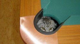 Маскировка от котиков — это мастерство.