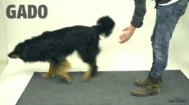 Маг Jose Ahonen показал, как собаки реагируют на фокус