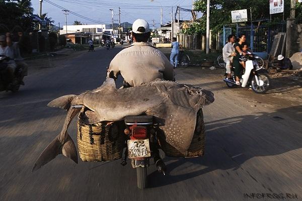 VietnameseMotorbikes2