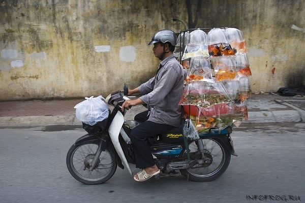 VietnameseMotorbikes4
